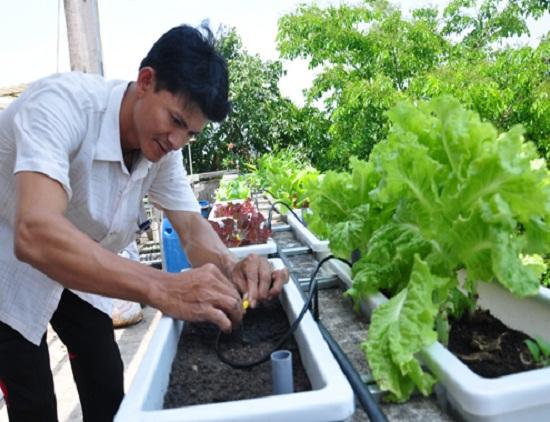 Chàng kỹ sư kiếm tiền tỷ từ rau sạch 5