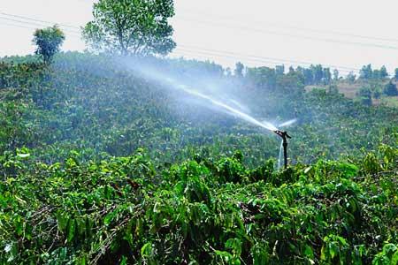 Những ngày mưa và những vỏ lon sữa: Sáng kiến tiết kiệm nước 2