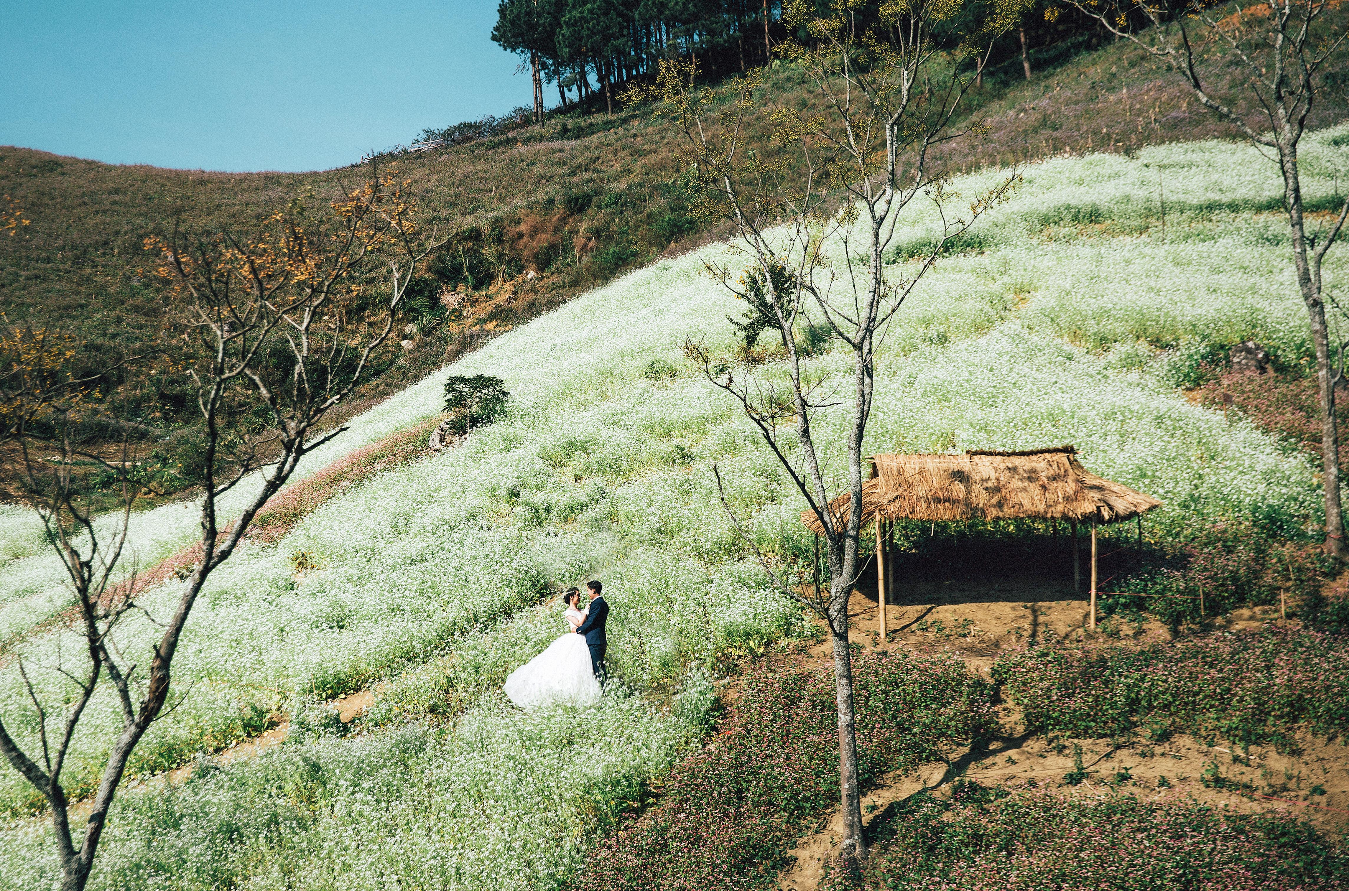 Mộc Châu ngập trằng sườn đồi mùa hoa cải đang tới