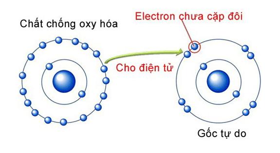Chất chống oxy hóa