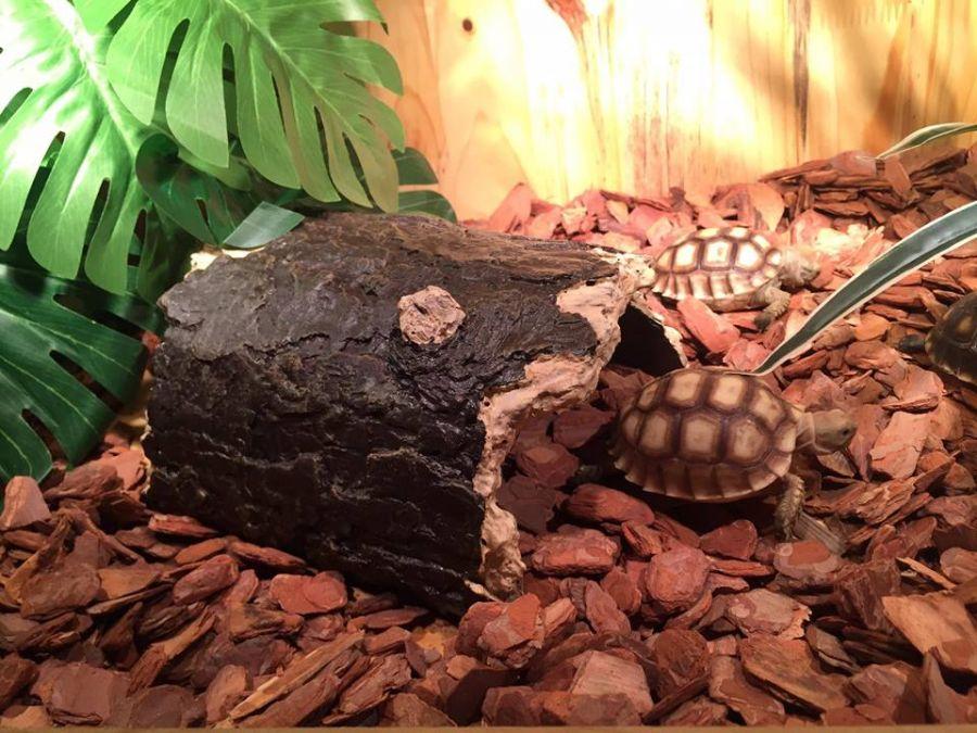 Bể gỗ chuyên dụng cho thú cưng rùa