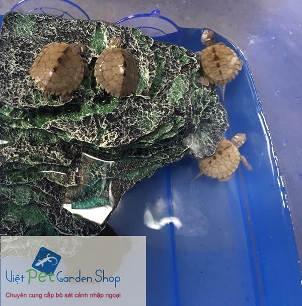 Đá nổi gắn thành bể cho thú cưng rùa leo trèo