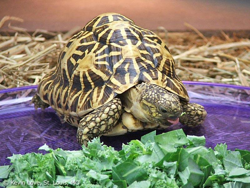 Thức ăn nuôi rùa cảnh luôn cần sạch sẽ, không thuốc trừ sâu